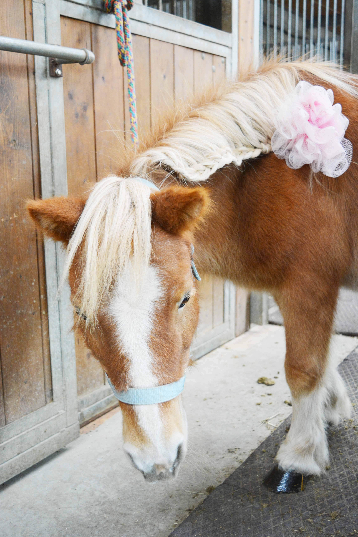 pony-party-cavalli-feste-torino