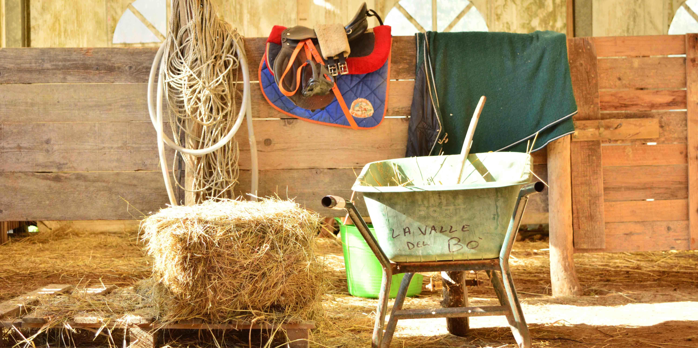 lavora-con-noi-cavalli-pony-maneggio