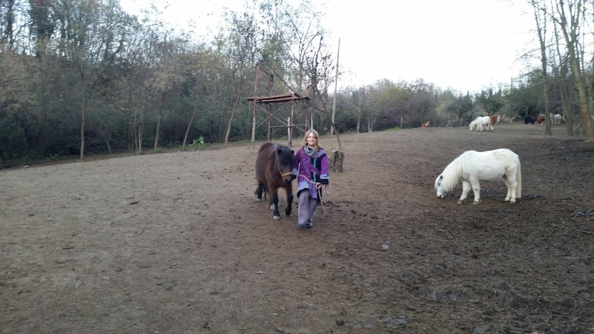 Pony-Shetland-Paddock-Zingara