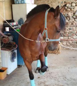 I cavalli della Valle del Bò: Itaca