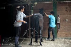 pensione-cavalli-privati-torino
