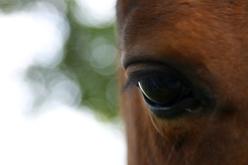I Nostri Pony
