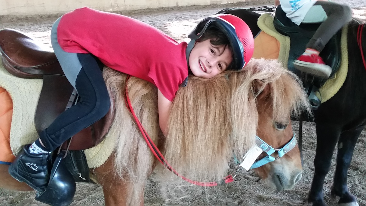 pony-shetland-rosetta