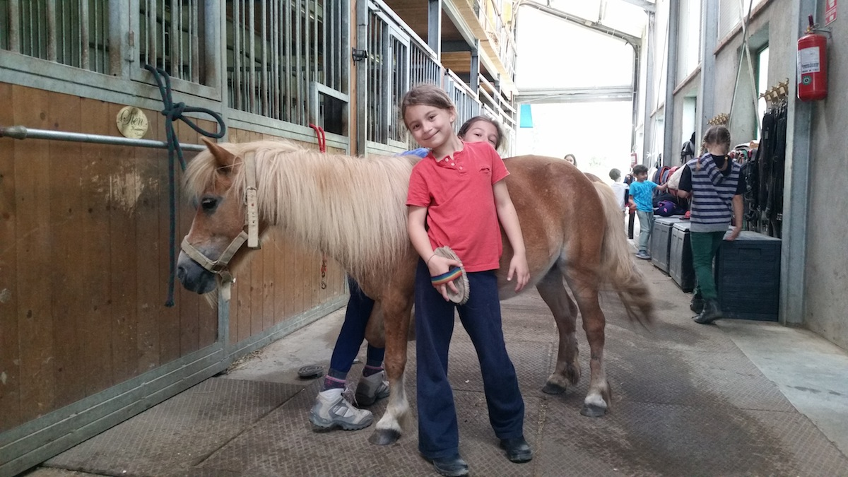 pony-shetland-scuderia