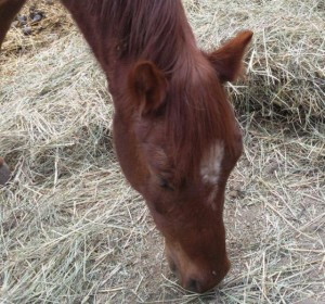 I pony della Valle del Bò: StarLady
