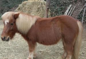 I pony della Valle del Bò: Trudy