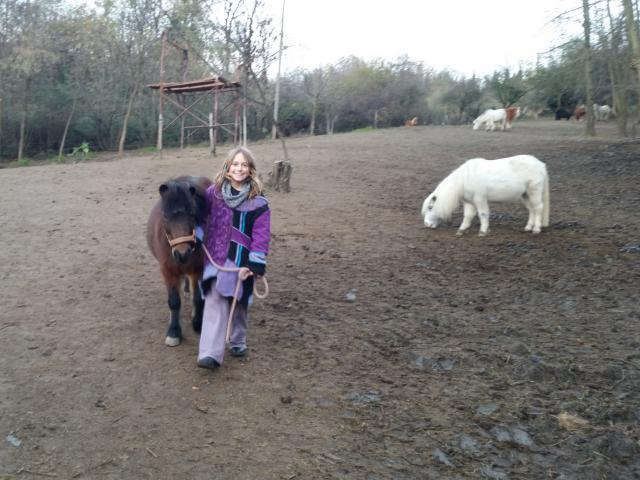 Pony: Zingara