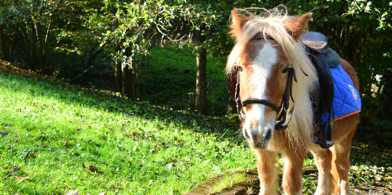 amicizia-pony-piccoli--battesimodellasella-torino