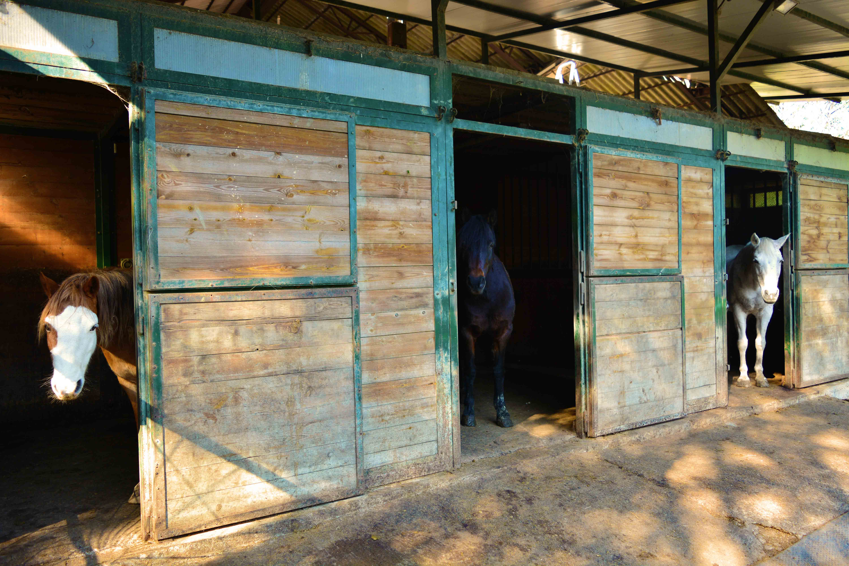 2019_Scuola-di-equitazione_04_box_pony