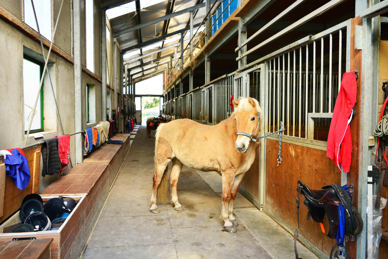 2019_Scuola-di-equitazione_05_scuderia-con-deisy