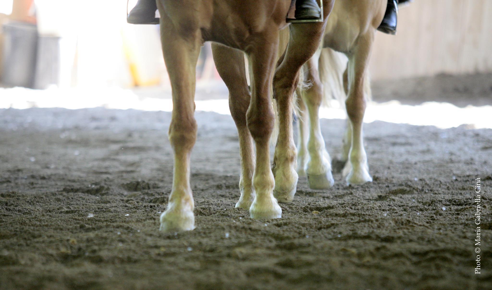 2019_Scuola-di-equitazione_09_piedi_cavalli