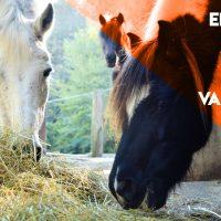 2020_emergenza-covid-19-valle-del-bo-3000x6000