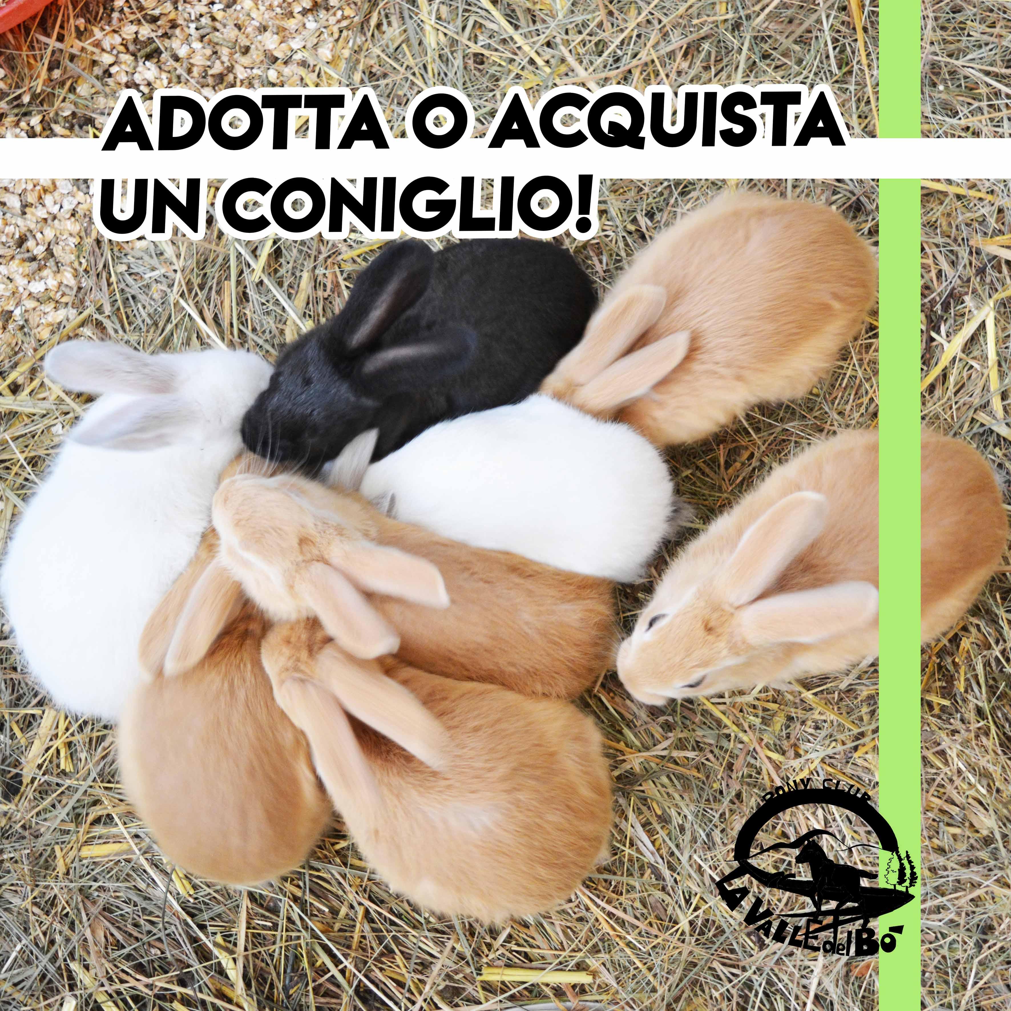2021_adotta-coniglio_pag01_compact