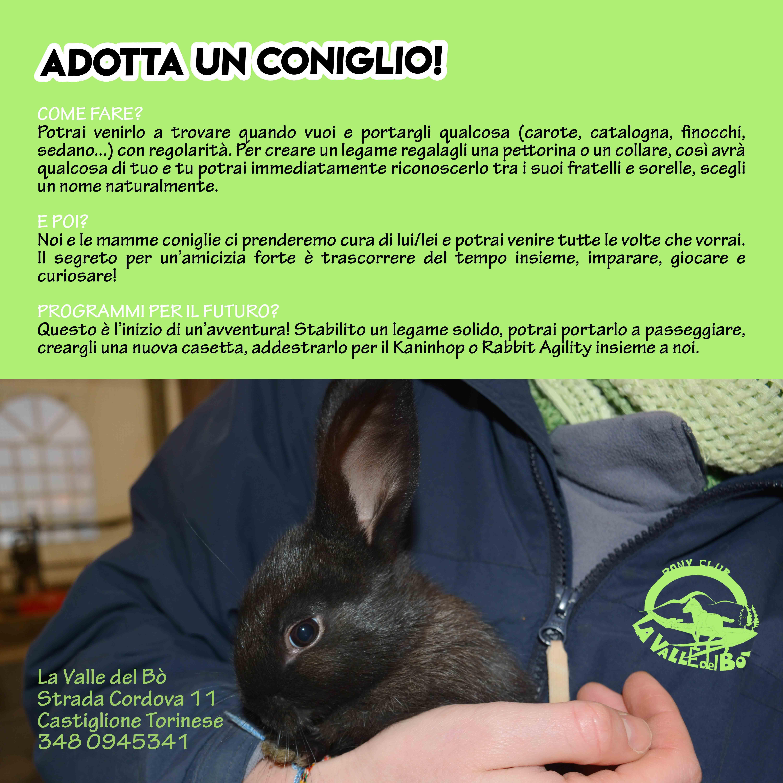 2021_adotta-coniglio_pag02_compact