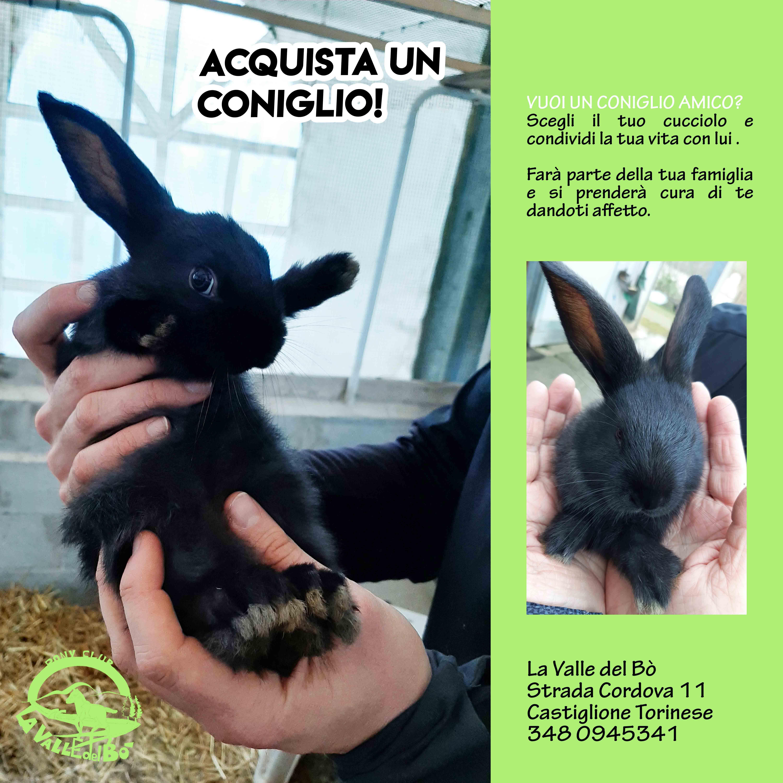 2021_adotta-coniglio_pag03_compact