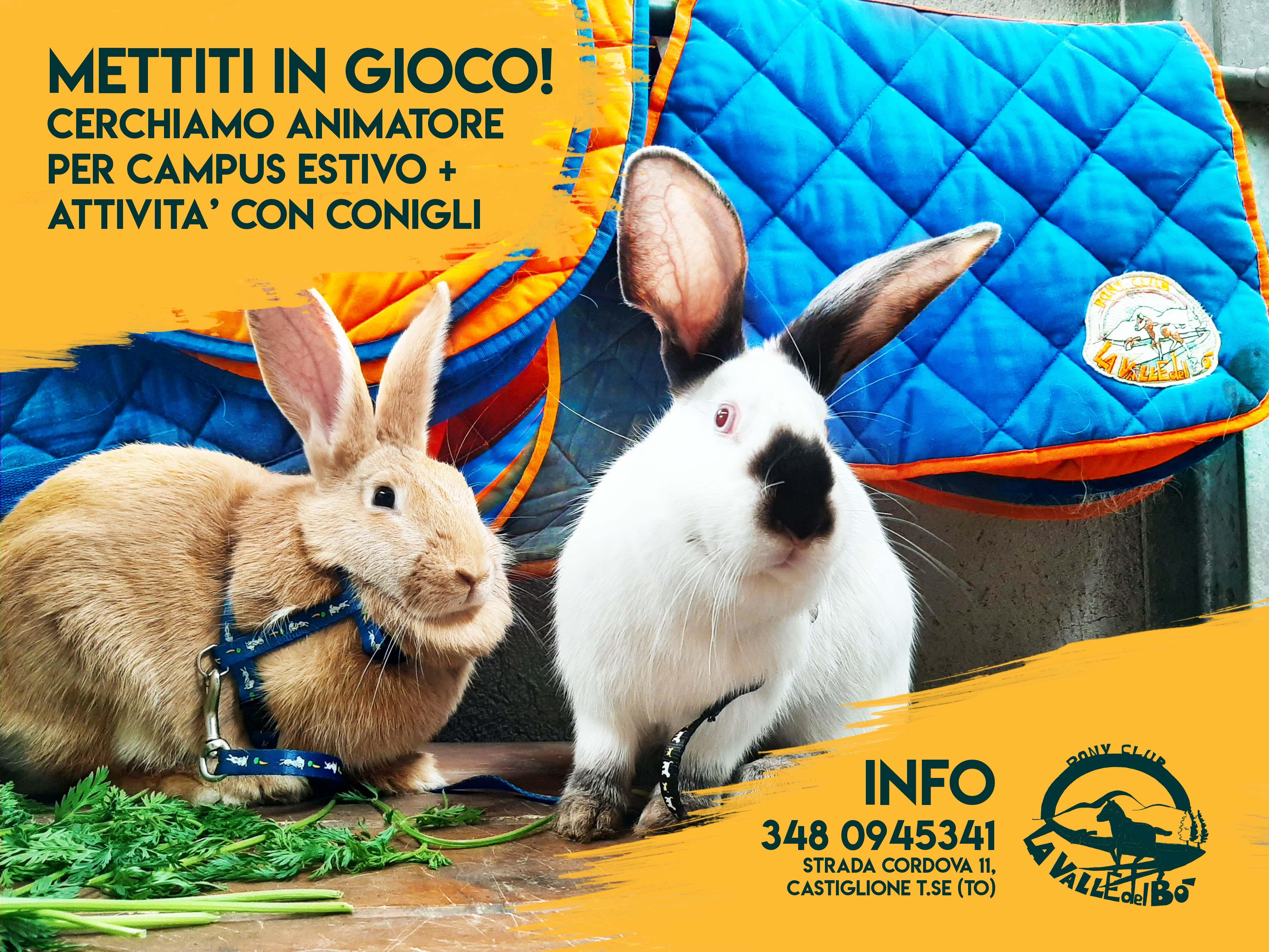 conigli-per-estate_01_2021-04-12