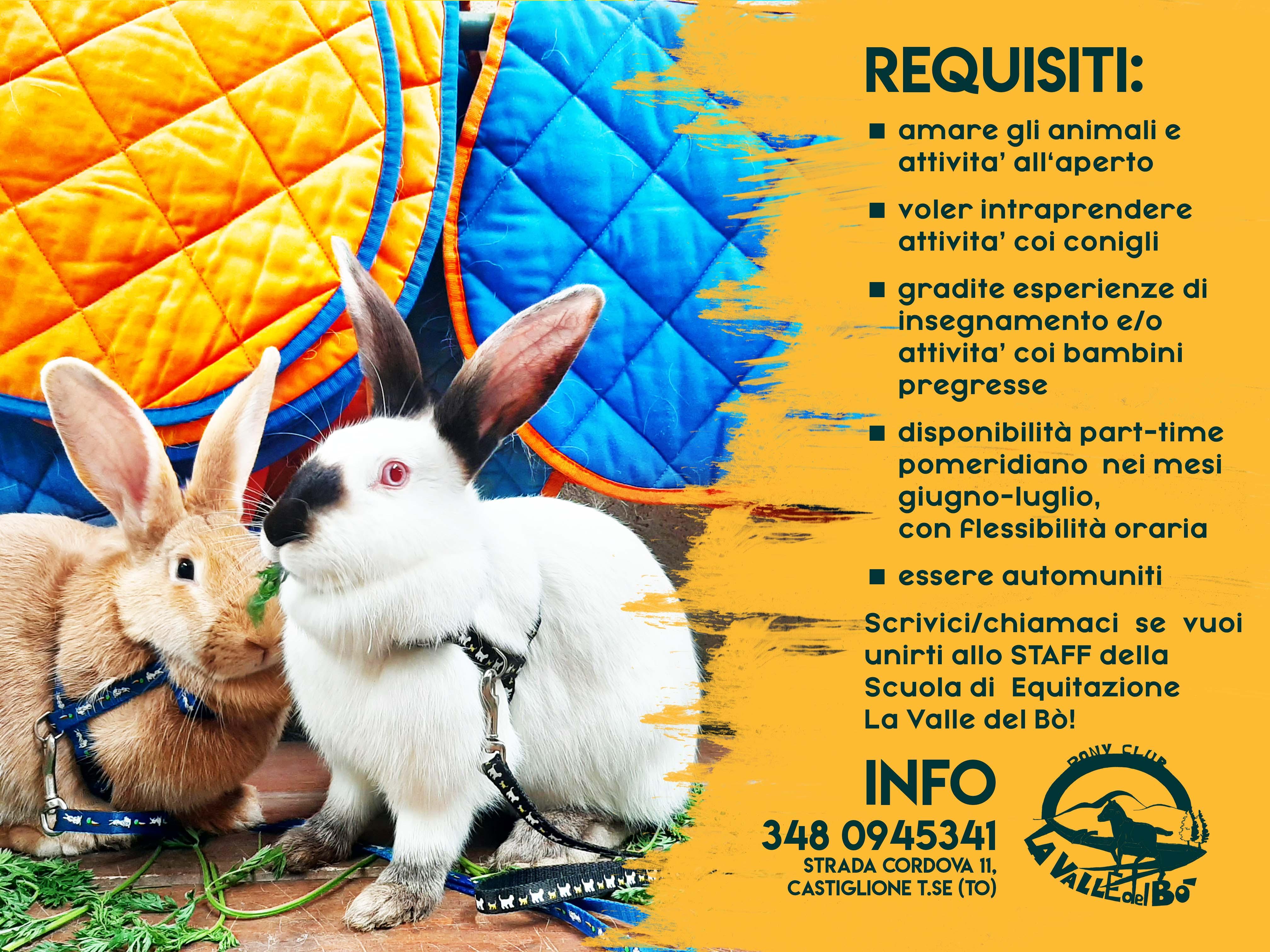conigli-per-estate_02_2021-04-12