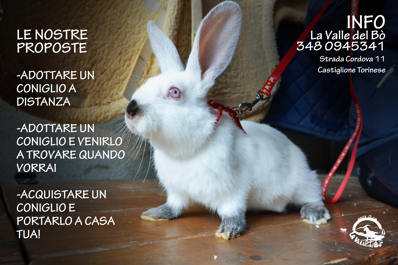 coniglio-bianco2_2021-01-17