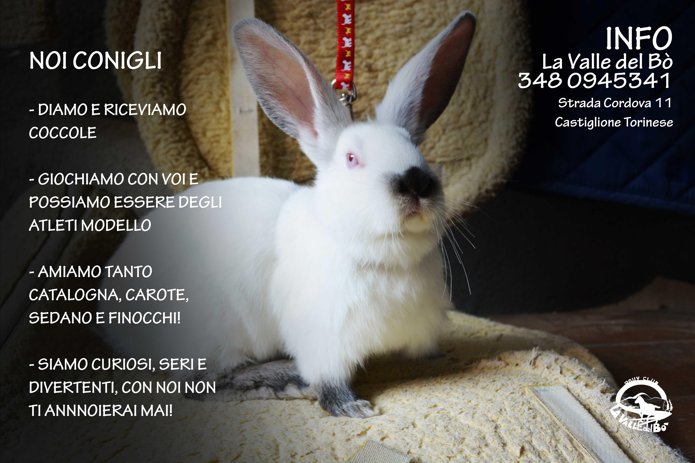 coniglio-bianco3_2021-01-17