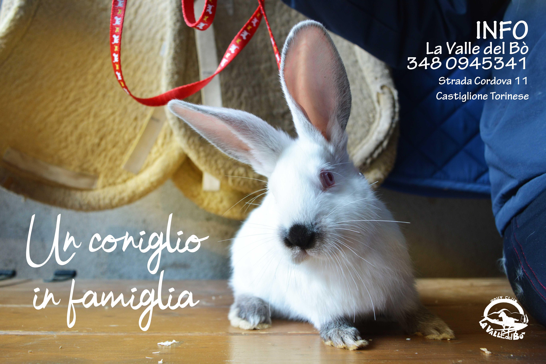 coniglio-bianco_2021-01-17
