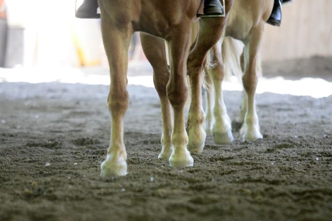 scuola-equitazione-la-valle-del-bo-torino